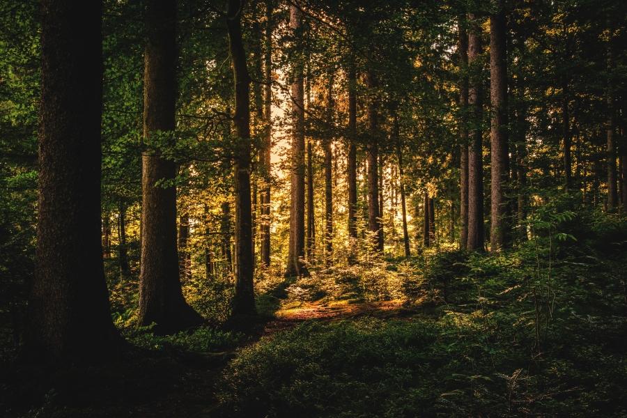 Light Rays - PiXimperfect - Sample Image.jpg