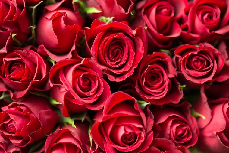 Picjumbo dot com Roses
