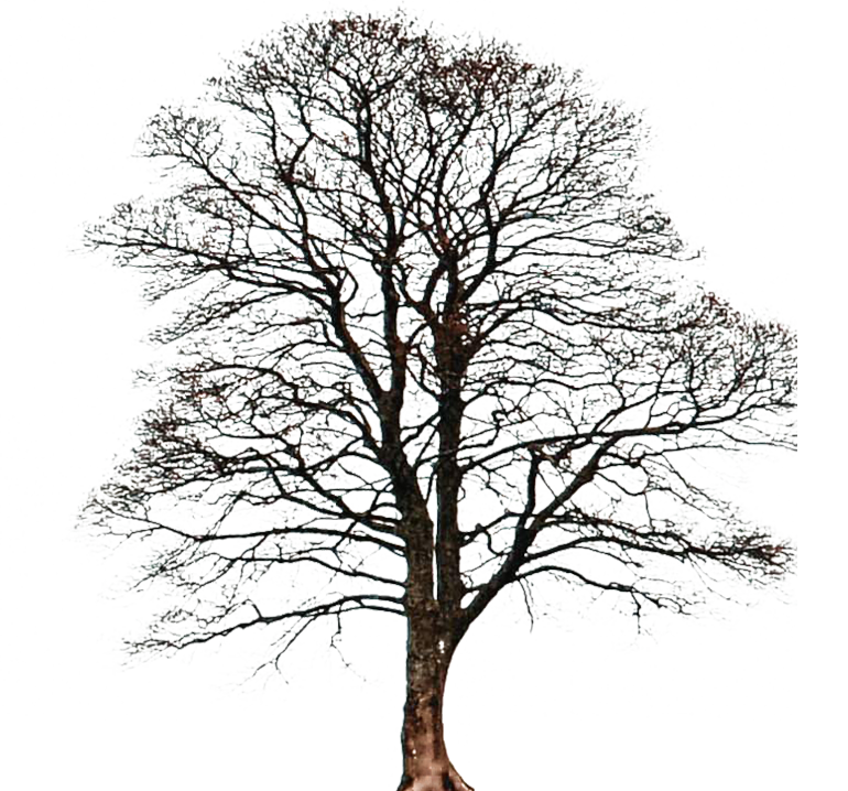 30 Days of Photoshop Day Two - Transparent PNG Tree Image